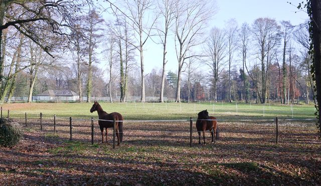 Gutersloh Horses-1