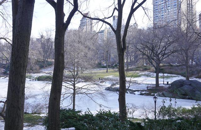 Central Park Feb 26